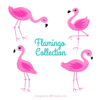 Coleção de flamingos plana em poses diferentes