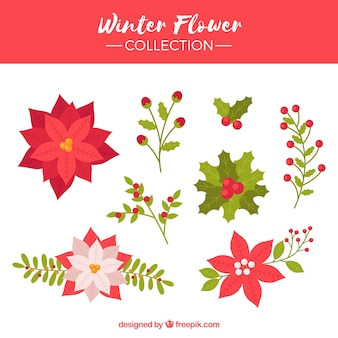 Coleção de flor de inverno