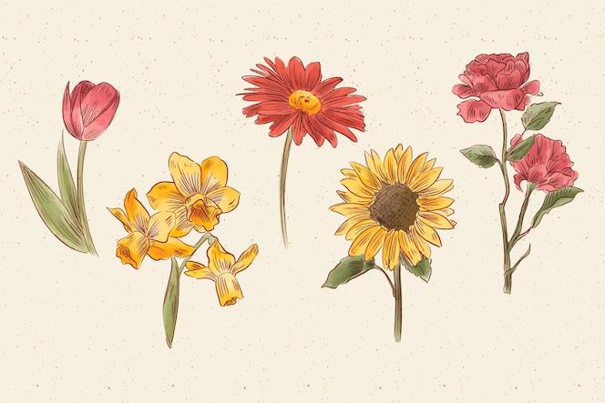 Coleção de flores botânica vintage