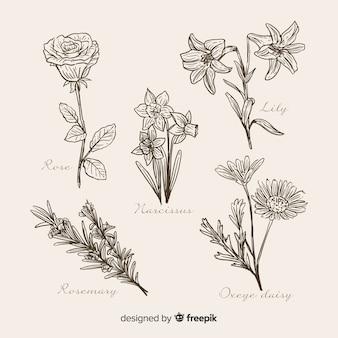 Coleção de flores botânicas mão realista desenhada