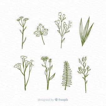 Coleção de flores botânicas realista mão desenhada