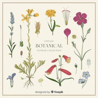 Coleção de flores botânicas vintage