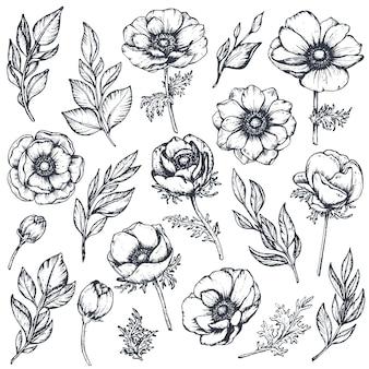 Coleção de flores, botões e folhas de anêmona desenhada à mão em estilo de desenho isolado