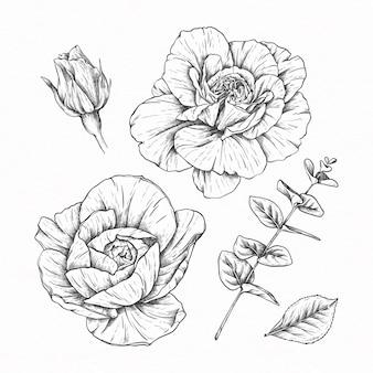 Coleção de flores com ilustração desenhada à mão