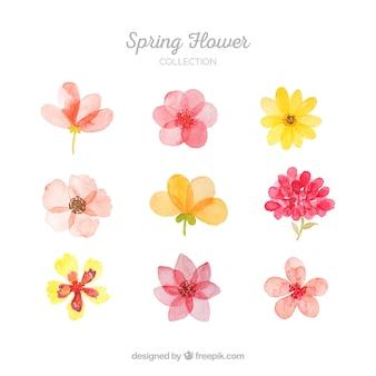 Coleção de flores da primavera