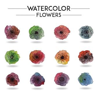 Coleção de flores de aquarela