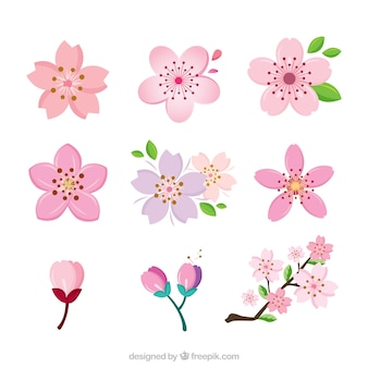 Coleção de flores de cerejeira