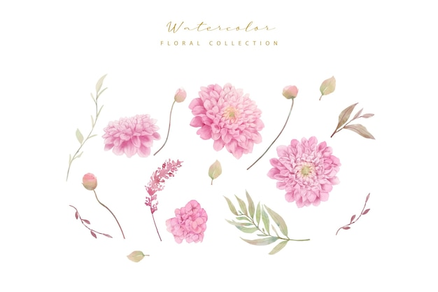 Coleção de flores de dálias em aquarela