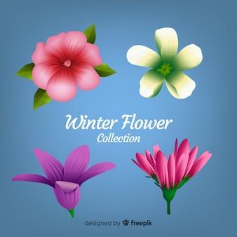 Coleção de flores de inverno realista