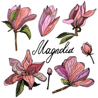 Coleção de flores de magnólia em um fundo branco isolado o contorno é desenhado à mão