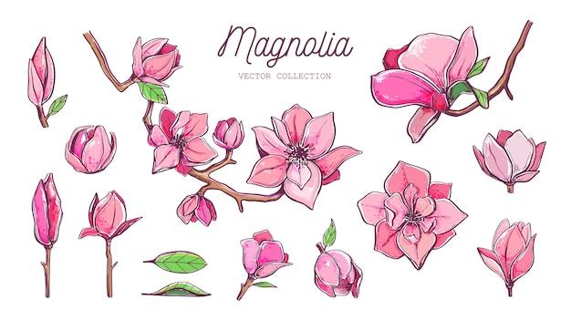 Coleção de flores de magnólia
