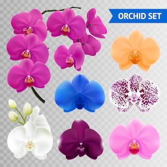 Coleção de flores de orquídea colorida