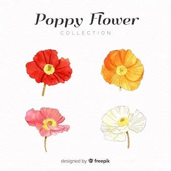 Coleção de flores de papoula