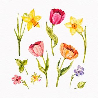 Coleção de flores de primavera aquarela colorida