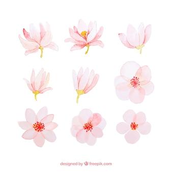 Coleção de flores de primavera de aquarela rosa
