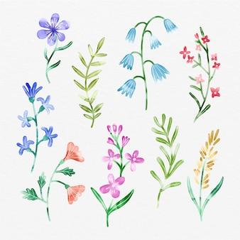 Coleção de flores de primavera pintada à mão
