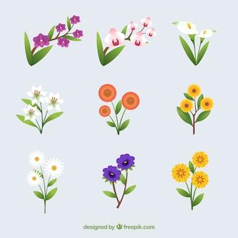 Coleção de flores de verão em design plano