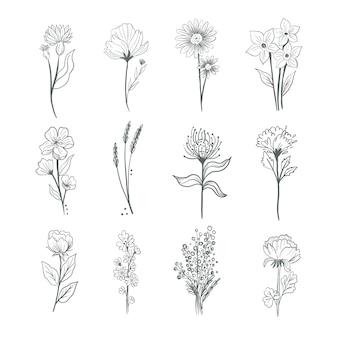 Coleção de flores desenhada à mão