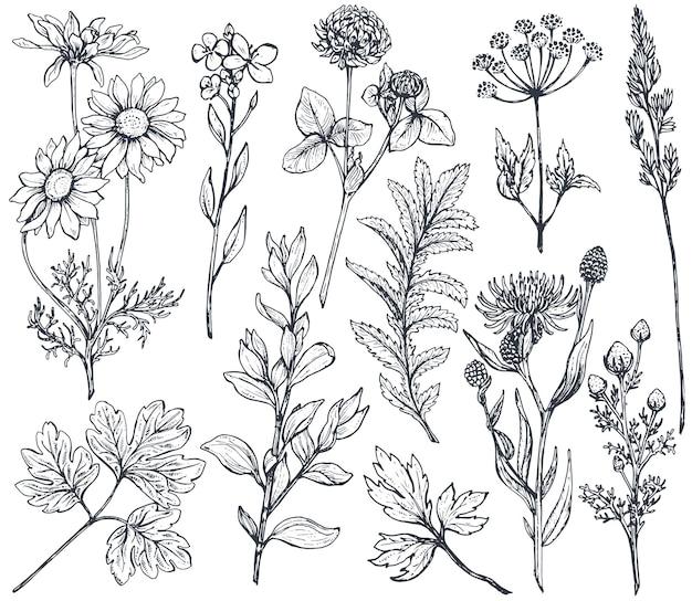 Coleção de flores desenhadas à mão e ervas isoladas em fundo branco