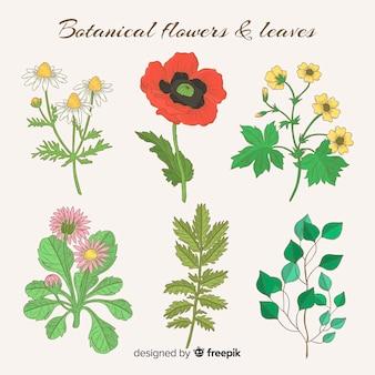 Coleção de flores e folhas botânica vintage