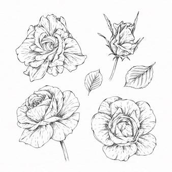 Coleção de flores e folhas desenhadas à mão