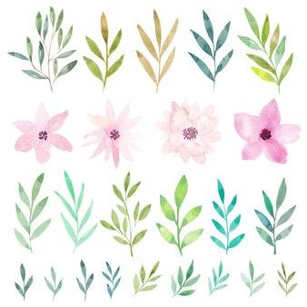 Coleção de flores e folhas em aquarela.