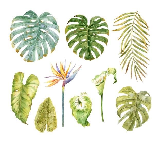 Coleção de flores e folhas tropicais conjunto aquarela