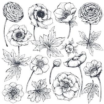 Coleção de flores e plantas da primavera de mão desenhada.