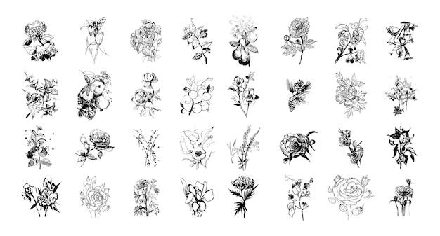 Coleção de flores e plantas desenhadas à mão