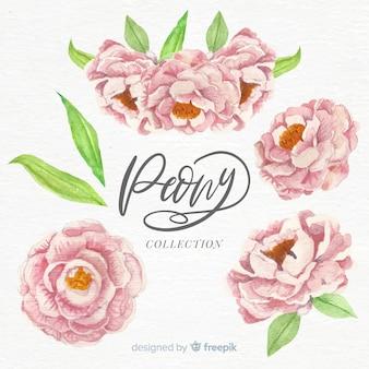 Coleção de flores elegantes peônia aquarela