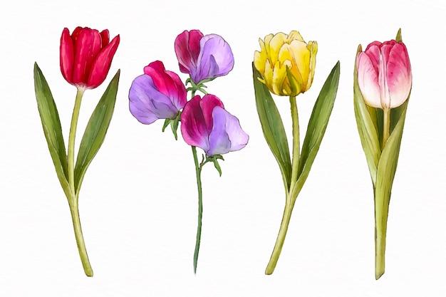 Coleção de flores em aquarela de primavera