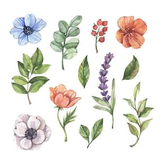 Coleção de flores em aquarela pintada à mão
