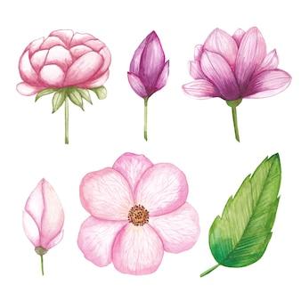 Coleção de flores em aquarela, rosa, magnólia, botão, lírio