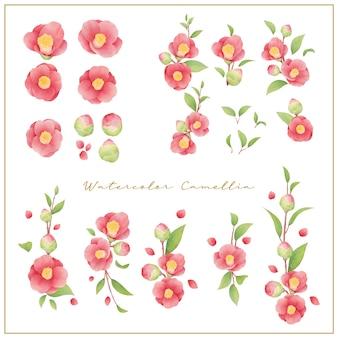 Coleção de flores em camélia em aquarela