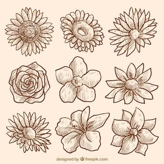 Coleção de flores esboços do vintage