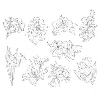 Coleção de flores. ilustração desenhada mão