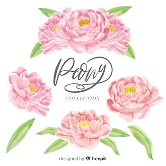 Coleção de flores peônia elegante em estilo aquarela