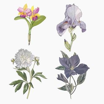 Coleção de flores pintadas à mão
