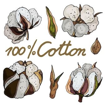 Coleção de flores secas de algodão em um fundo branco isolado