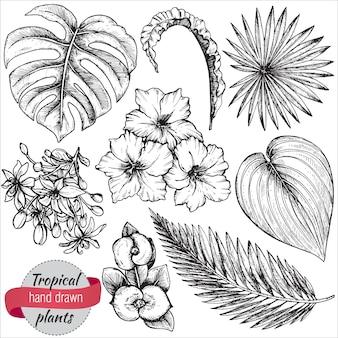 Coleção de flores tropicais de mão desenhada, folhas de palmeira, plantas da selva. preto e branco