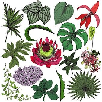 Coleção de flores tropicais de mão desenhada, folhas de palmeira, plantas da selva.