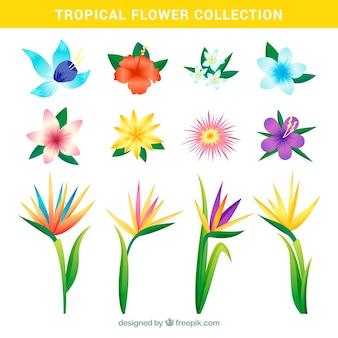 Coleção de flores tropicais em estilo realista