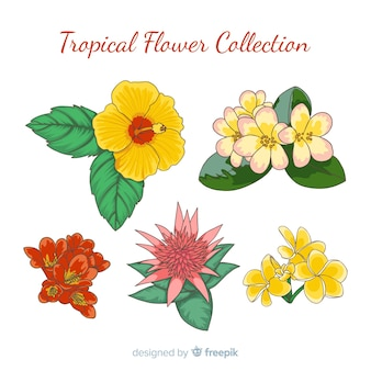 Coleção de flores tropicais