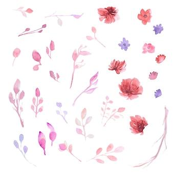 Coleção de flores watercollor
