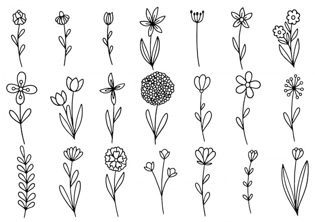 Coleção de floresta de samambaia eucalipto arte folhagem folhas naturais ervas em estilo de linha.