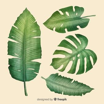 Coleção de folha tropical realista