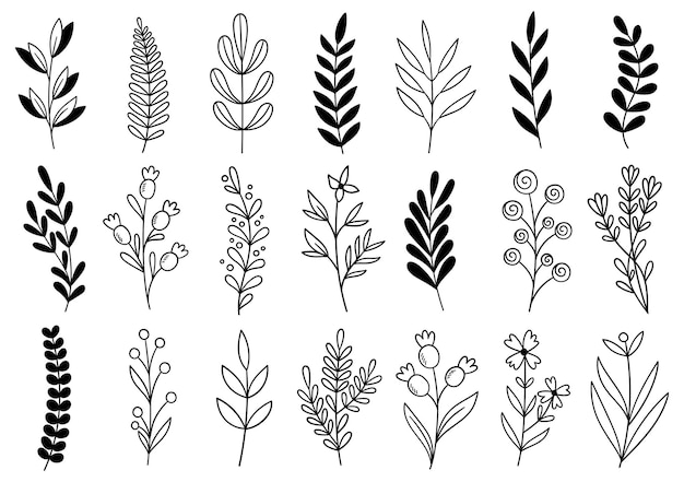 Coleção de folhagens artísticas de eucalipto