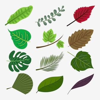 Coleção de folhas botânicas