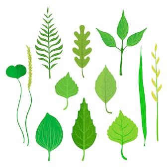 Coleção de folhas de árvores e plantas