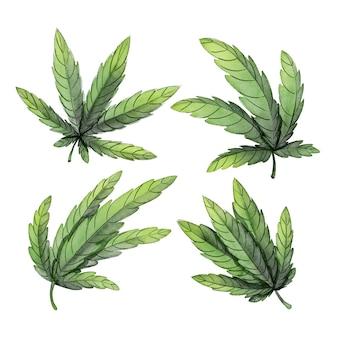 Coleção de folhas de cannabis botânica em aquarela